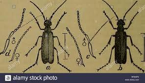 La American entomologo. Entomologia. 24 LA AMERICAN ENTOMOLOGO ...