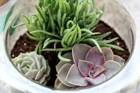 diy succulent terrarium changing my