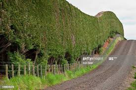 32 Windbreak Fence Photos And Premium High Res Pictures Getty Images