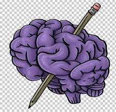 png clipart brain clip art graphic