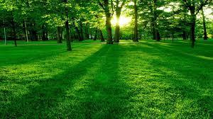 خلفيات خضراء عالية الوضوح للتحميل مجانا