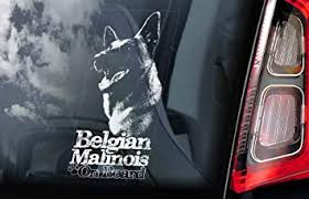 Amazon Com Belgian Malinois On Board Clear Decal Sticker For Car Window Mechelse Herder Security K9 Dog Sign Decal Quality Unique Vinyl Designs Decor Computers Accessories