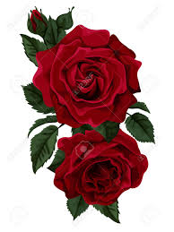 Hermoso Ramo De Rosas Rojas Aisladas En Blanco Perfecto Para Las