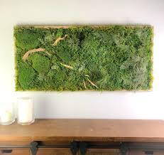 display moss decor natural wall art