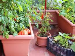 container gardening growing