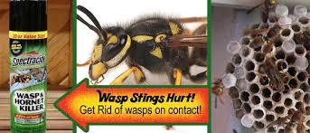 tackling the dreaded wasp lemhi lumber