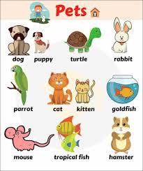 Tên các con vật bằng tiếng anh | Từ vựng & hình ảnh - VerbaLearn
