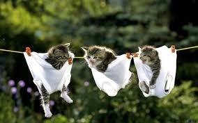cute kittens wallpapers for desktops