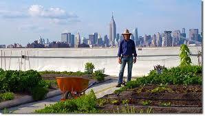 brooklyn grange a rooftop farm in new york
