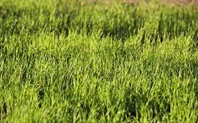ربيع مشرق العشب الأخضر خلفيات Abali Ru