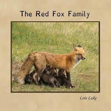 the red fox family nas lojas americanas com