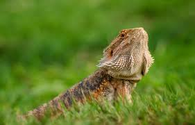 the 9 best bearded dragon supplies of 2020