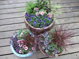 Flowers for Spring Containers