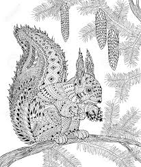 The Squirrel For Adult Anti Stress Coloring Page For Art Therapy