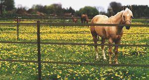 Horseguardfence Com F A Q