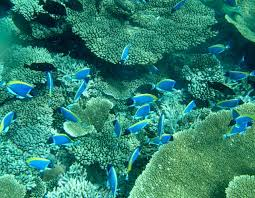 いつでも「沖縄の海の中」を楽しめる!海中展望施設7選 | 沖縄リピート