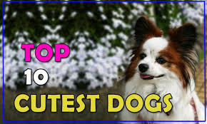 the 10 cutest dog breeds in the world