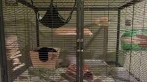 chinchilla cage tour you