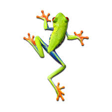 Tree Frog 17 X 24 Roaring Wall Photos Decals Touch Of Modern