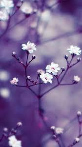 flower branch blossom spring petal