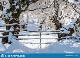 Wooden Fence In Snow Covered Winter Garden Stock Image Image Of Freeze Deep 140791483