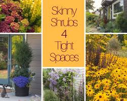 skinny shrubs for tight spaces le