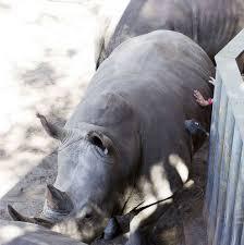 Rhino Encounter' at Brevard Zoo ...