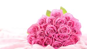 rose flower wallpapers 67 images