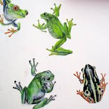 Frog Wall Stickers Frog Decals Frog Wall Decor Tree Frog Etsy