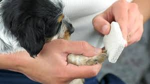 how to file puppy nails 10 steps with