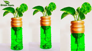 how to grow money plant in water