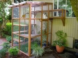 Are Catios Coyote Safe Catio Spaces