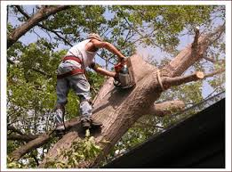 Why Hire a Tree Removal Service Crh Home Center