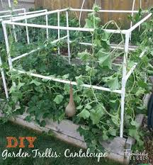 45 Trellis Ideas You Can Build Yourself Simplified Building