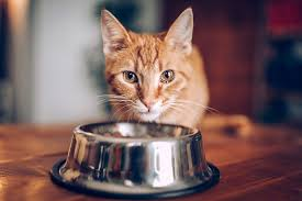 homemade cat food recipes how to