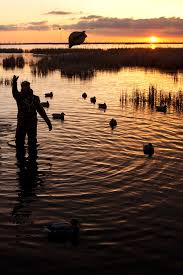 18 gallery images for duck hunting