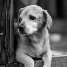 ابيض اسود صور كلاب حزينة صور حزينة Sad Images