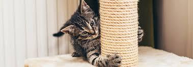 easy diy cat scratching post ideas