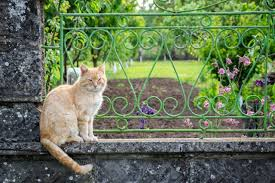 Beautiful Beige And White Cat Resting In The Garden Relaxing On The Fence Of The House Eyes Closed Kitty Kitten Background Outdoor Green Lying Down Beauty Home House Living Nature Adorable