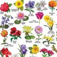 flora name with hindi and english