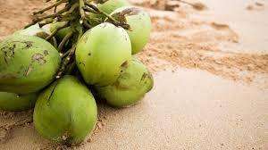 Hasil gambar untuk coconut