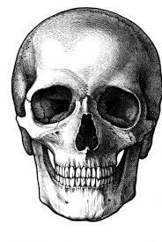black and white skull wallpaper