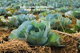 top 75 vegetable gardening blogs and