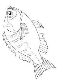 Kleurplaat Vissen Vissen Dieren Kleurplaten Vissen Tekenen