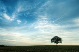 صور اشجار جميلة في اجدد خلفيات ورمزيات شجر ميكساتك