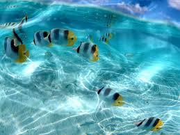 colorful tropical fish ocean