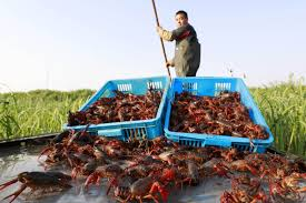 Crawfish proves pricey as supplies lag - Chinadaily.com.cn