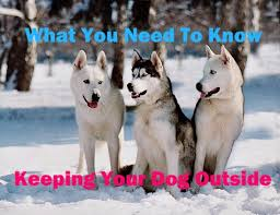 What You Need To Know To Keep Your Dog Outside Pethelpful By Fellow Animal Lovers And Experts