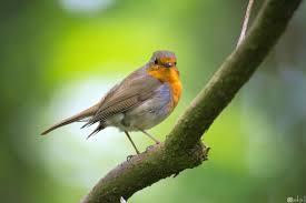 10 صور طيور جميلة جدا من الطبيعة الساحرة