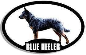 Amazon Com Jr Studio 3x5 Inch Oval Blue Heeler Sticker Aussie Acd Australian Cattle Dog Silhouette Vinyl Decal Sticker Car Waterproof Car Decal Bumper Sticker Kitchen Dining